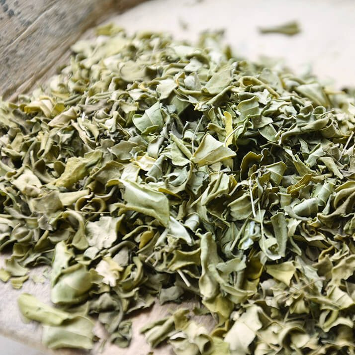 Kräuterladen Paracelsus - Moringa